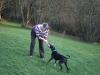 Trainer-Mensch-Hund Spiel 01
